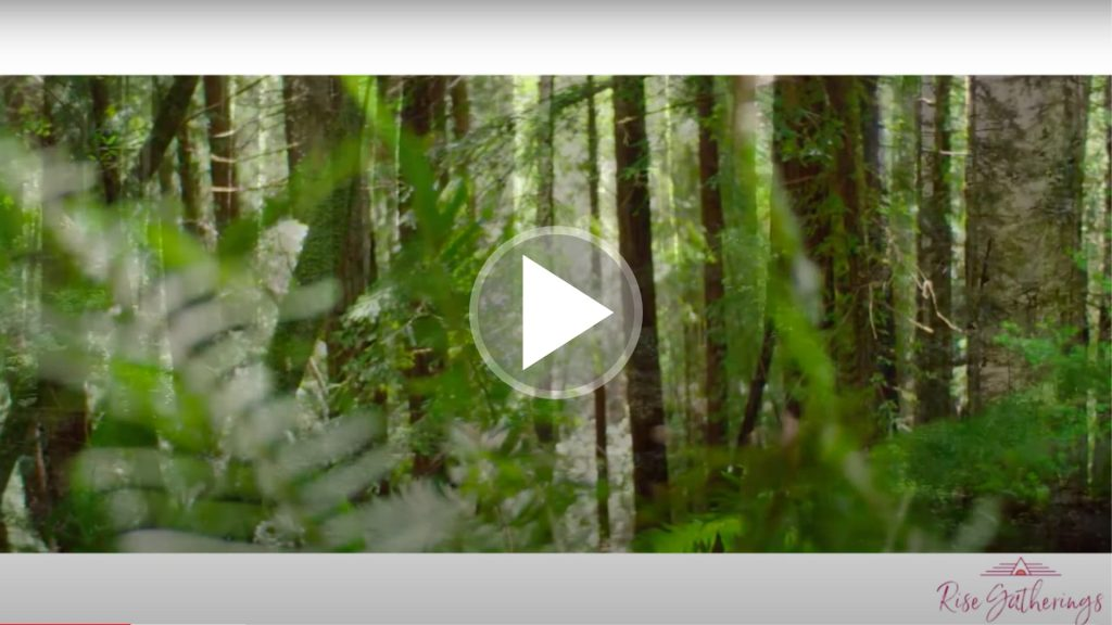 Information about forest bathing.